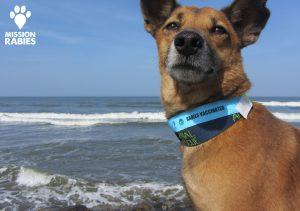 mission rabies dog