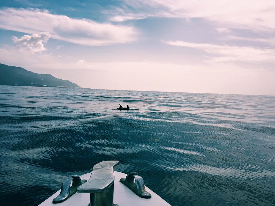 Dolphin la palma