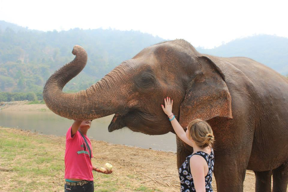 elephant nature park in chiang mai thailand, perfect for a 10 day itinerary