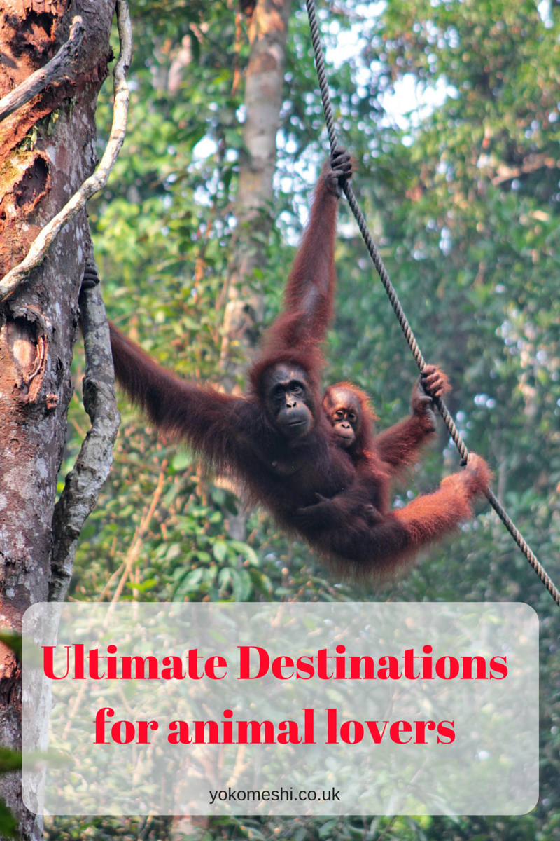 Ultimate Destinations for animal lovers