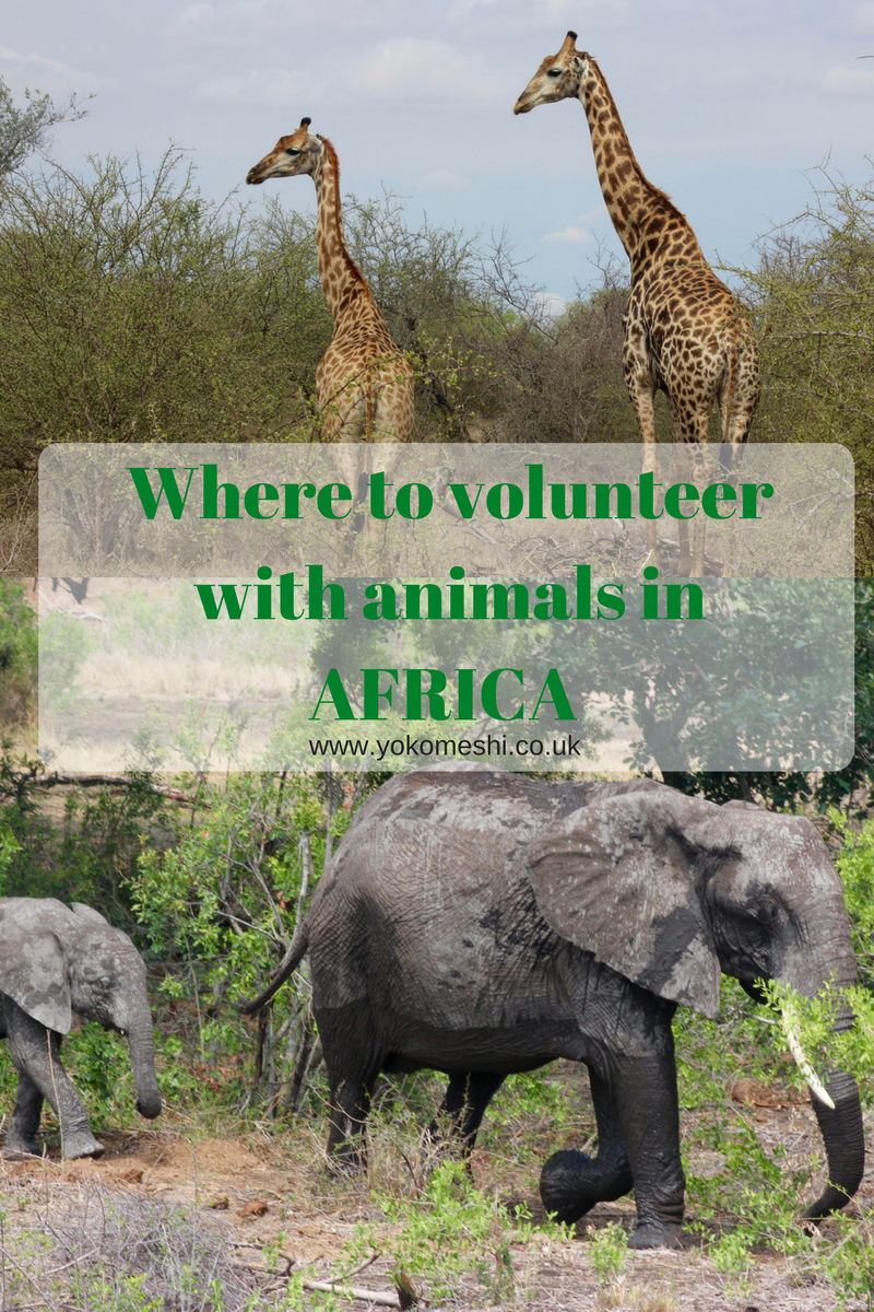 Volunteeringwith animals in AFRICA 1 copy