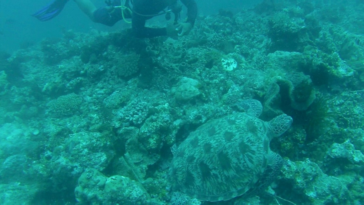 turtle during a scuba diving trip in bali - an ethical way to see balis animals