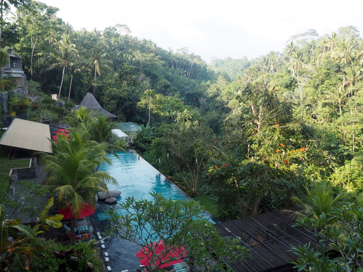 The view of the swimming pool in Jungle Fish, Ubud, Indonesia. A great place to spend a relaxing day while on your two weeks in indonesia
