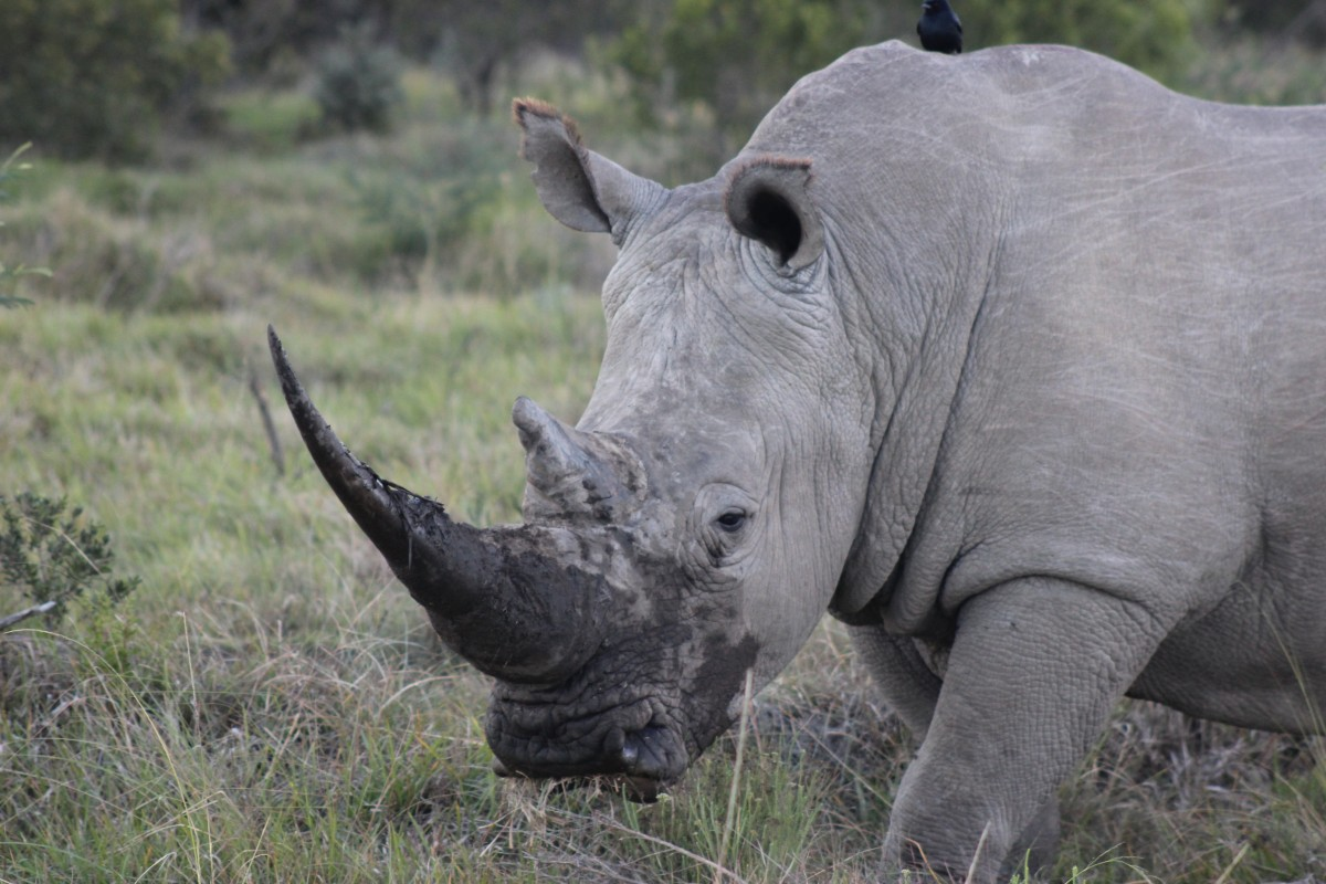 Donate to Rhino Conservation