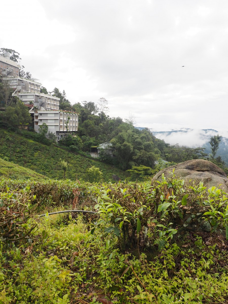 view across the hills of the munnar tea plantations