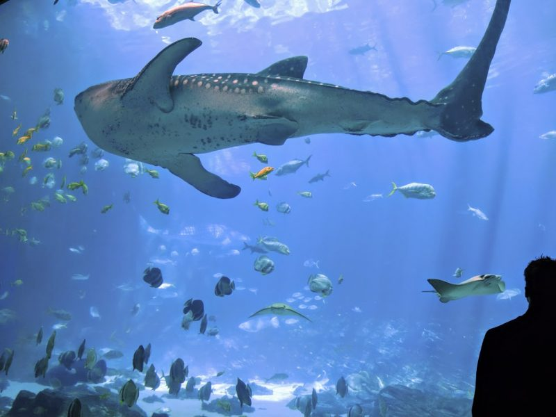 atlanta aquarium america road trip