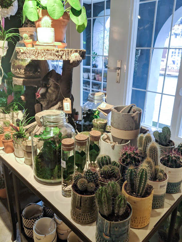 succulent shop in utrecht