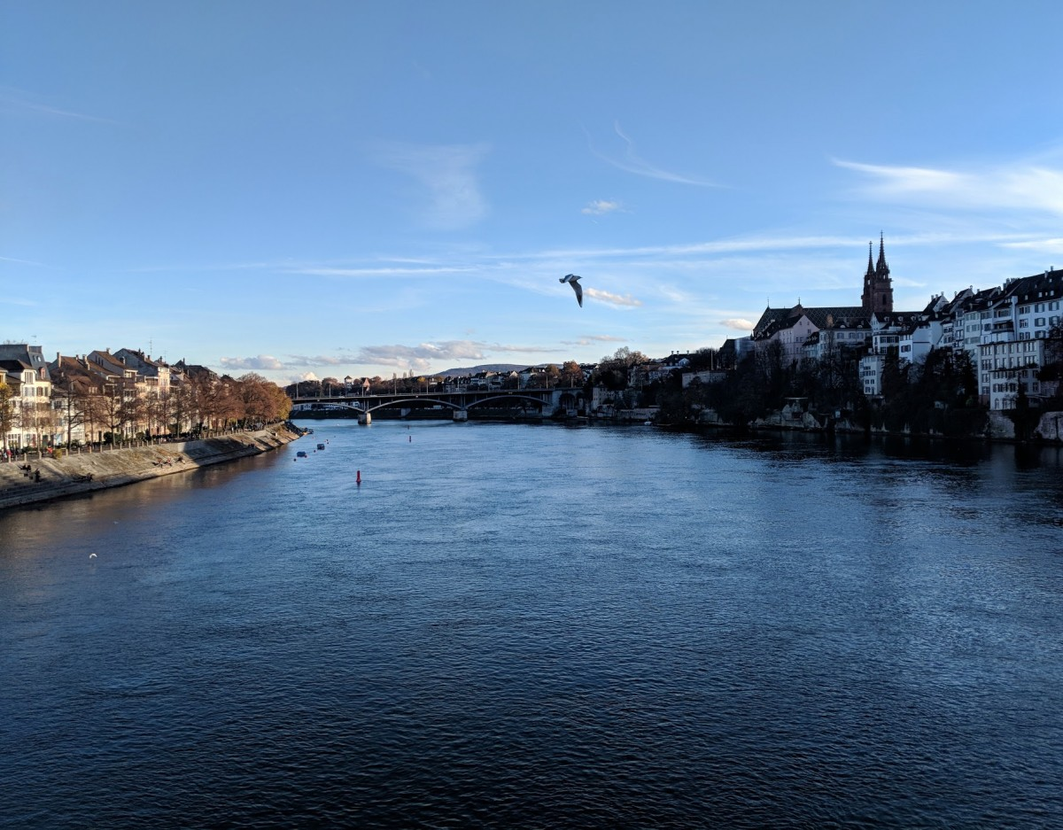 bird flying across the rhine river in Basel with a bright blue sky