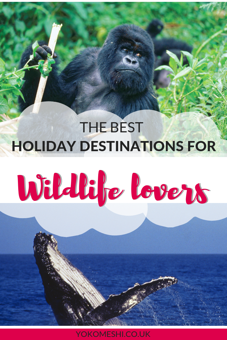 the best holiday destinations for wildlife lovers